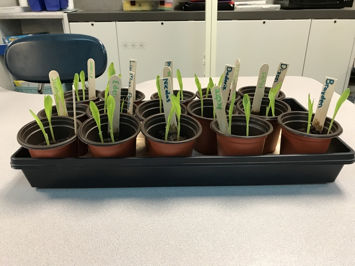 Our week one week of growth! The class is excited to see the progress each day.